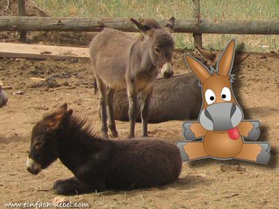 emule-farm