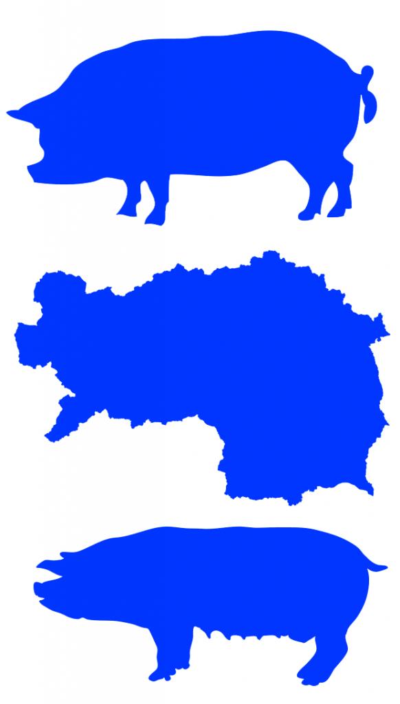 blaue-schweine